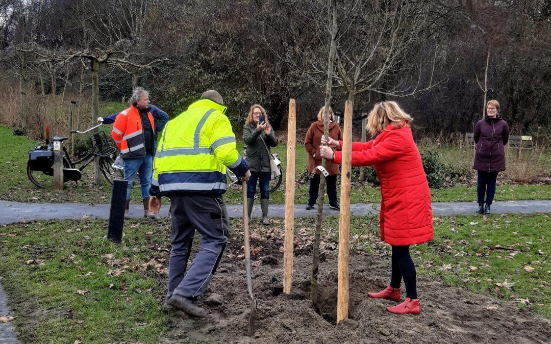 Nieuwe bomen geplant