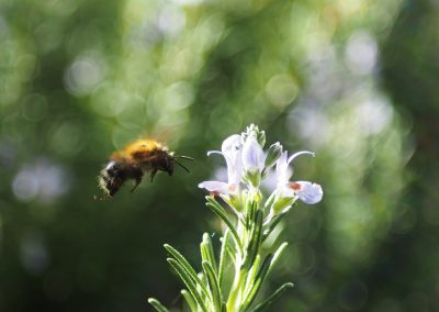 Bijenstroken